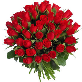 Rose Wild Fever Fifty  Red Roses
